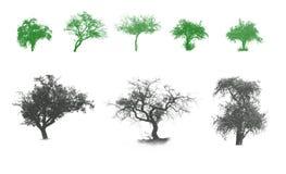 Illustrazione con gli alberi Immagine Stock