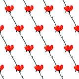 Illustrazione con i fiori del papavero isolati su fondo bianco Fondo di estate Fotografia Stock Libera da Diritti