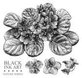 Illustrazione con la viola dei fiori disegnata a mano con inchiostro nero Immagini Stock