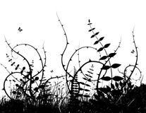 Illustrazione con le piante. Vettore Fotografie Stock