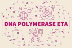 Illustrazione concettuale di affari con la DNA polimerasi e di parole illustrazione di stock