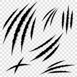 Illustrazione creativa dei graffi della zampa degli artigli isolati su fondo Disegno di arte Scratch animale di orrore del gatto, royalty illustrazione gratis