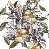 Illustrazione d'annata con i fiori disegnati a mano di vettore in annata V illustrazione di stock