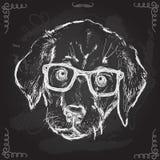 Illustrazione d'annata del cucciolo dei pantaloni a vita bassa con i vetri Royalty Illustrazione gratis