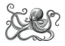 Illustrazione d'annata dell'incisione del disegno della mano del polipo sul BAC bianco royalty illustrazione gratis