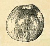 Illustrazione d'annata di una mela dal vecchio libro sovietico illustrazione di stock