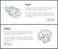 Illustrazione d'annata di vettore del pettine e dell'ostrica illustrazione vettoriale