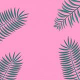 Illustrazione d'avanguardia e semplice di vettore della struttura della decorazione delle foglii di palma immagini stock libere da diritti