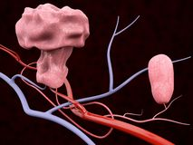 illustrazione 3d del polipo con le vene ematiche, fondo nero isolato illustrazione vettoriale