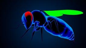 illustrazione 3d dell'ape del miele isolata su fondo blu illustrazione di stock