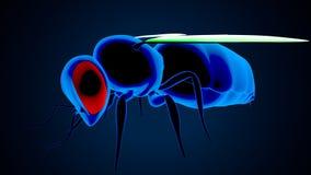 illustrazione 3d dell'ape del miele isolata su fondo blu royalty illustrazione gratis