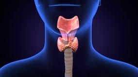 illustrazione 3d dell'esofago del corpo umano illustrazione vettoriale