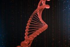 illustrazione 3d della molecola del DNA La molecola rossa elicoidale di un nucleotide nell'organismo come in spazio Genoma di con illustrazione vettoriale