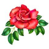 illustrazione 3D della rosa rossa Fotografia Stock Libera da Diritti