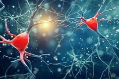 illustrazione 3D della struttura di Brain Neurons dell'essere umano illustrazione di stock