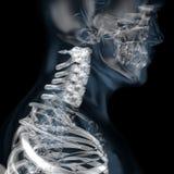 illustrazione 3d della vertebra cervicale scheletrica del corpo umano illustrazione vettoriale