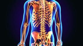illustrazione 3d di anatomia dello scheletro del corpo umano illustrazione vettoriale
