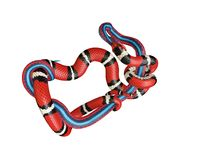 illustrazione 3D di un re Snake Swallowing di California un serpente di rosso blu Fotografia Stock