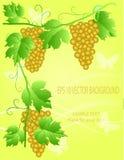 Illustrazione decorativa dell'uva Fotografie Stock Libere da Diritti