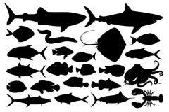 Illustrazione degli animali marini illustrazione vettoriale