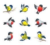 Illustrazione degli uccelli di inverno Fotografia Stock Libera da Diritti