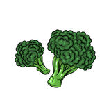 Illustrazione dei broccoli di vettore su fondo bianco Immagini Stock