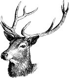 Illustrazione dei cervi. Fotografie Stock