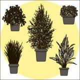 Illustrazione dei fiori in vaso Fotografie Stock
