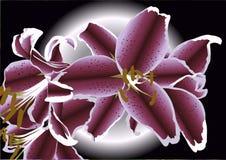Illustrazione dei lillies Fotografie Stock