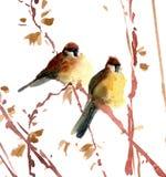 Illustrazione dei passeri dell'acquerello Fotografia Stock