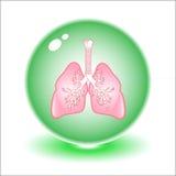 Illustrazione dei polmoni di vettore Fotografia Stock