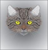 Illustrazione dei silvestris selvaggi del Felis del gatto Fotografie Stock Libere da Diritti