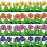 Illustrazione del bordo del fiore Immagine Stock