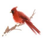Illustrazione del cardinale dell'acquerello Fotografie Stock