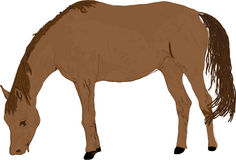 Illustrazione del cavallo Fotografia Stock Libera da Diritti