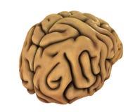 Illustrazione del cervello umano Fotografia Stock Libera da Diritti