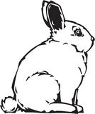 Illustrazione del coniglietto Fotografia Stock