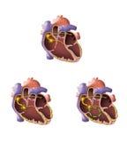 Illustrazione del cuore Fotografie Stock Libere da Diritti