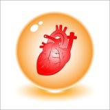 Illustrazione del cuore di vettore Fotografia Stock Libera da Diritti