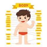 Illustrazione del diagramma delle parti del corpo del ragazzo royalty illustrazione gratis