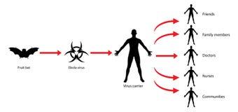 Illustrazione del diagramma di diffusione del virus della trasmissione di ebola Fotografie Stock Libere da Diritti