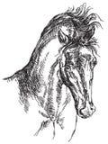 Illustrazione del disegno della mano di vettore della testa di cavallo Fotografia Stock Libera da Diritti