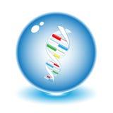 Illustrazione del DNA di vettore Fotografia Stock