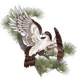Illustrazione del falco, Fotografie Stock