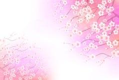 Illustrazione del fiore della prugna nel Giappone illustrazione vettoriale