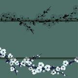 Illustrazione del fiore di ciliegia giapponese su fondo rosa Fotografia Stock Libera da Diritti