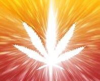 Illustrazione del foglio della marijuana Fotografie Stock