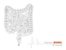 Illustrazione del fondo scientifico dell'estratto degli intestini royalty illustrazione gratis