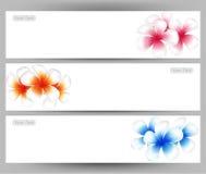 Illustrazione del frangipane del fiore delle Hawai, modello variopinto dell'opuscolo di plumeria illustrazione di stock
