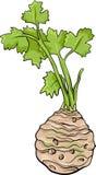 Illustrazione di verdure del fumetto del sedano Fotografie Stock